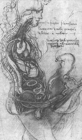 Половой акт в разрезе. Рисунок Леонардо да Винчи