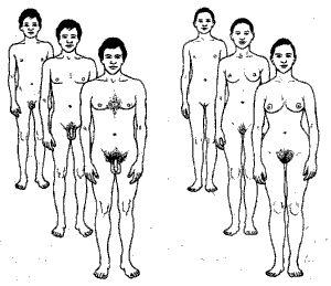 Половое созревание